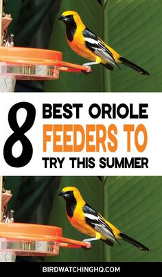 Oriole feeders are designed to feed jelly, nectar, mealworms, or oranges (fruit). Try these feeders to attract these orange, beautiful birds. Oriole Bird Feeders, Best Bird Feeders, Diy Bird Feeder, Humming Bird Feeders, Bird House Kits, Bird Aviary, How To Attract Birds, Backyard Birds, Colorful Birds