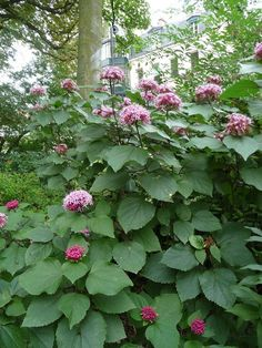 TOP 10 Unusual Fragrant Plants and Herbs to Grow in Your Garden