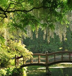 Enchanting bridge at Hatley Park Castle / Vancouver Island ... near Victoria, Canada