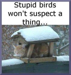 Funny Cat Photo: stupid birds - ha ha!