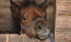 Les Roseaux de Goulaine à Saint-Julien-de-Concelles : Promenade à poney pour enfant: Moment de détente et de fun pour les enfants et leurs…