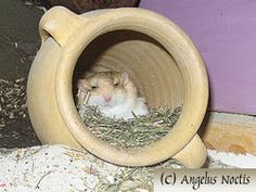 clay pots, even broken ones with no sharp parts make good gerbil toys.  Try stacking them to make different levels