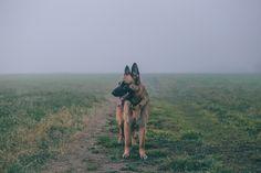 Dog   https://www.fanfiction.net/s/11328856/28/Stigmatic