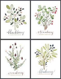 4 BERRIES SET Culinary Art Collection by evajuliet on Etsy, Maybe 2 of the berry ones with 2 black herb ones from her for the dining room?