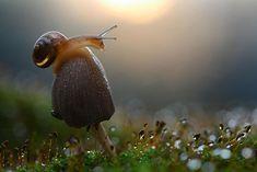 macro-fotografia-insectos-caracoles-naturaleza-vadim-trunov-09