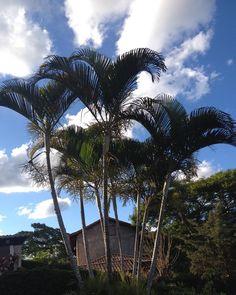 Natureza #semfiltro #miguelpereira #serra #regiaoserrana #riodejaneiro #brasil #instagram #balaiodeestilos