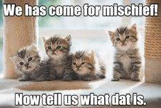 Nah, they'll figure it out on their own. - LOLcats is the best place to find and submit funny cat memes and other silly cat materials to share with the world. We find the funny cats that make you LOL so that you don't have to. Cat Captions, Funny Animals With Captions, Cute Animal Memes, Funny Animal Pictures, Cute Funny Animals, Cute Baby Animals, Animal Sayings, Silly Cats, Cute Cats And Kittens