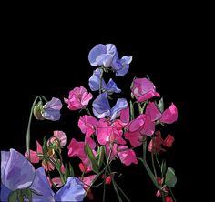 Sweetpeas on Photo Block Photo Blocks, Painting Flowers, Website, Printed, Digital, Illustration, Plants, Prints, Illustrations