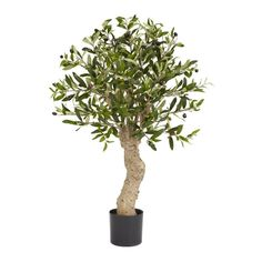 Olive Silk Tree - 2.5 Feet Tall ** More info could be found at the image url.