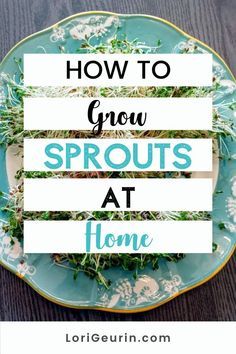 Learn how to grow sprouts from home in this quick and easy tutorial and video. Sprouts are fun and easy to grow and so nutritious to eat. You can grow broccoli, mung bean, alfalfa, and other types of sprouts using trays or Mason jars.    #howtogrowsprouts #sprouts #broccolisprouts #growsproutsindoors #growsproutsinatray #microgreens Alfalfa Seed, Alfalfa Sprouts, Sprouts Salad, Broccoli Sprouts, Hobbies To Try, Hobbies That Make Money, Diy Crafts And Hobbies, Growing Sprouts