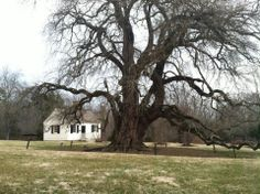 Polegreen staff visited Patrick Henry's Red Hill on March 10. Beautiful place!