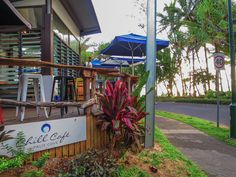 Wake up in Palm Cove to fabulous views and a delicious breakfast at one of the amazing cafes near Marlin Waters! #palmcove #tropicalNQ
