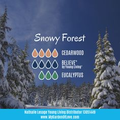 A beautiful woodsy blend that truly transports you in a snowy forest on a beautiful sunny day.