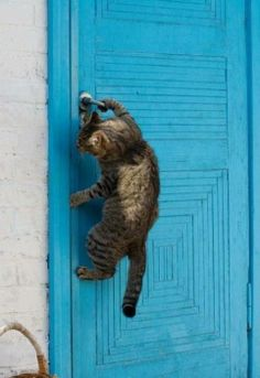 BE CAREFUL WITH THE PAINT , SILLY CAT...!!