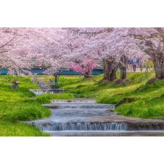 ⋆ .  今日は#観音寺川 の桜を撮りに💨。:°ஐ♡* 猪苗代は今が満開なんですね🍀 とっても綺麗でした⁽⁽٩(๑˃̶͈̀ ᗨ ˂̶͈́)۶⁾⁾💗 . そこから近かった達沢不動滝へ🚗 途中、野生のお猿さんに遭遇🙉w 滝周辺は緑が増えてきてましたが まだまだ草木は寂しい感じ🤔💫 . 明日は彼にメンテナンスしてもらった OM-1を持って出かけます٩(ˊᗜˋ*)و🌸 好みのフィルムも何本か見つけたし フィルム使いの皆様、いろいろ教えて下さい🙇🏻 夜は晴れそうなので、どっかで星撮ります おやすみなさーい🙌🏻✨ . Locatio / 福島県 #fukushimagram #桜 #桜並木 #cherryblossom . . #team_jp_ #team_jp_東  #team_jp_flower #wu_japan #LOVES_NIPPON  #Lovers_Nippon_2016春色 #Lovers_Nippon #tokyocameraclub #bella_shots #Landscape #photooftheday #ptk_natu...