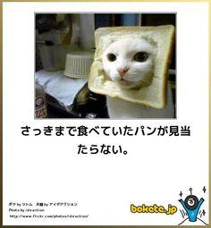さっきまで食べていたパンが見当たらない。