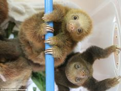 "Cute sloths are about to star in their own documentary called ""Meet the Sloths""."