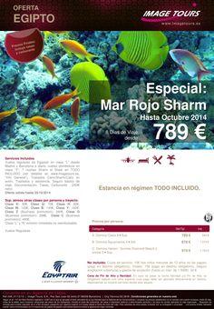Especial Mar Rojo Sharm hasta octubre 2014, 8 días estancia en todo incluido desde 789 €. ultimo minuto - http://zocotours.com/especial-mar-rojo-sharm-hasta-octubre-2014-8-dias-estancia-en-todo-incluido-desde-789-e-ultimo-minuto/