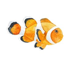 Clown Fish Art Print of Watercolor by SaylorWolfWatercolor on Etsy