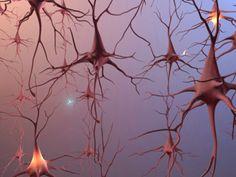 Brain cells.