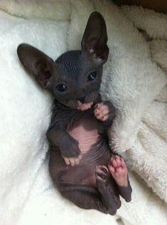 Tooooo Cute!