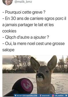 #VDR #HUMOUR #FUN French Meme, Funny French, Funny Cute, Hilarious, Funny Memes, Jokes, Best Tweets, Image Fun, Boys Like