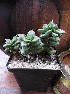 3 plants in the Plants category was listed for on 9 Aug at by Deonrick in Middelburg Plants, Pot, Succulents, Garden
