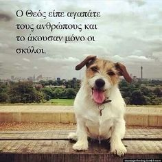 Oohhhhhh my cutie😘😭😚💞💞💞 Dog Quotes, Life Quotes, Greek Quotes, Embedded Image Permalink, Animal Kingdom, Picture Quotes, Pet Birds, Good To Know, Famous People