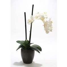 Silk Cream-White Phalaenopsis Orchid in Black Ceramic Plum Pot Phalaenopsis Orchid, Orchids, Faux Flowers, Silk Flowers, Faux Flower Arrangements, Glass Ceramic, Fabric Online, Cream White, Black House