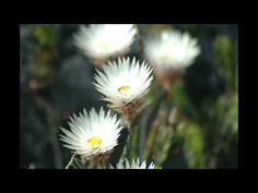 Table Mountain, A Photographic Tour part 4