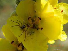 Herbalism, Plants, Decor, Herbal Medicine, Decoration, Plant, Decorating, Planets, Deco