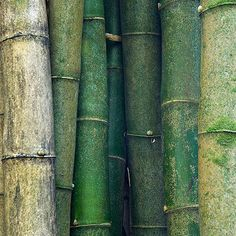 """Shades of green. Bamboo From """"the poetry of material things"""" … – Michael Bergeron Shades of green. Bamboo From """"the poetry of material things"""" … Shades of green. Bamboo From """"the poetry of material things"""" Dark Green Aesthetic, Rainbow Aesthetic, Nature Aesthetic, Aesthetic Colors, Aesthetic Collage, Go Green, Green Colors, Colours, Green Art"""
