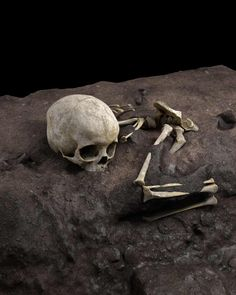 Archaeologists uncover oldest human burial in Africa | Archaeology | The Guardian Early Humans, First Humans, Bones Show, Archaeology News, Prehistory, National Museum, Ancient History, The Guardian, Art World