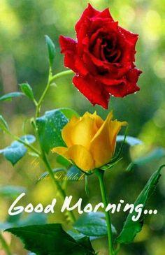 Good Morning Friends Images, Good Morning Beautiful Pictures, Good Morning Beautiful Flowers, Good Morning Images Flowers, Good Morning Roses, Good Morning Cards, Good Morning Funny, Good Morning Picture, Good Morning Greetings