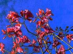flowers - lia.eliades