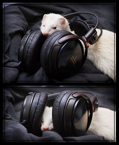 Rockin' Out with my Ferret!