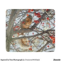 Squirrel In Tree Photograph Cutting Board