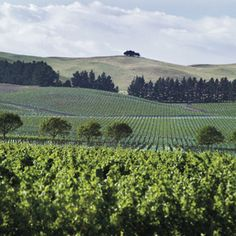 Waipara Wine Country, New Zealand Central Otago, New Zealand Travel, Auckland, Wine Country, Places Ive Been, Vineyard, To Go, Earth, Outdoor