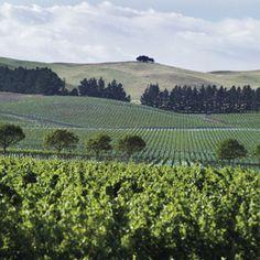 Waipara Wine Country, New Zealand