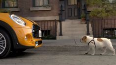 Bullheaded: Spike Meets The New #MINI in the loveable new commercial. Hit the image to watch the #viralvideo