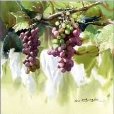Shin Jong Sik is a famous Korean watercolor painter. He takes flowers, hemp clothes and dishes as his subjects. He composes his art with new. Watercolor Fruit, Gold Watercolor, Watercolor Landscape, Watercolour Painting, Watercolor Flowers, Painting & Drawing, Watercolors, L'art Du Fruit, Fruit Art
