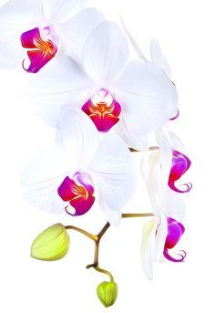 Fotografía de Orquídeas  |  Bob Jensen
