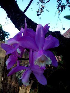Orquídeas Roxas!!