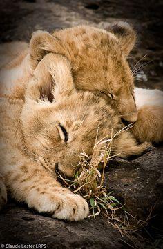 "Africa | ""Sweet Dreams"". Kenya | ©Claude Lester"