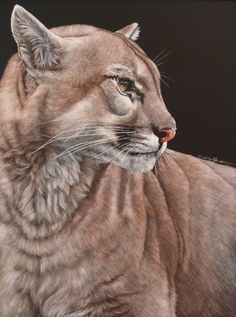 expectant - scratchboard by Sally Maxwell