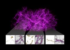 Slime Mold Simulations Map Dark Matter Holding Universe Together | NASA