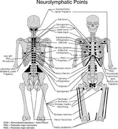 Neurolymphatic points (for lymph drainage)