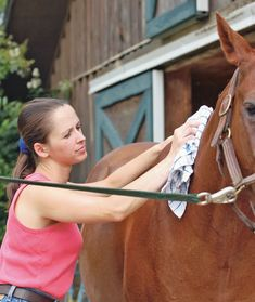 Head-to-Toe Horse Grooming Tips and Tricks. Pin now read later- might be something useful in here :)