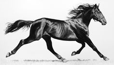 """Confirmation, charcoal on paper, 47 x 80"""" by Virginia Fifield"""