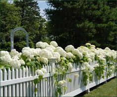 Walpole Outdoors Fences- flowering shrubs along the fences